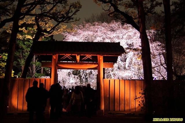 2015年の花見はココ!東京の桜の名所8選