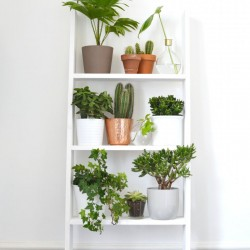 DIY plant shelf