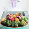 Cactus-Cluster-645x964
