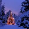 一味違ったクリスマスツリーを☆目からウロコ!なアイデア10選